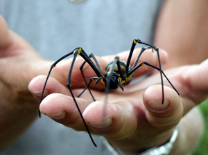 close up of a large spider in man's hand