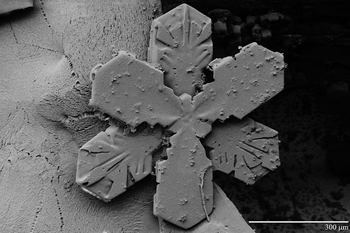 Low temperature scanning electron microscope a snow crystal