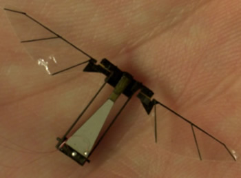 robot insect in man's hand